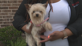 Greenville woman who helped reunite dog with owner pays it forward with reward money