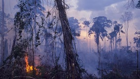 Study: Parts of Amazon rainforest now emit more CO2 than what is absorbed