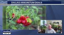 Dallas Arboretum hosts first Pepper Palooza