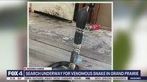 Venomous Cobra snake missing in Grand Prairie, search underway