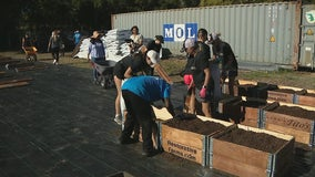 Vacant lot in South Dallas food desert transformed into urban farm for new growers