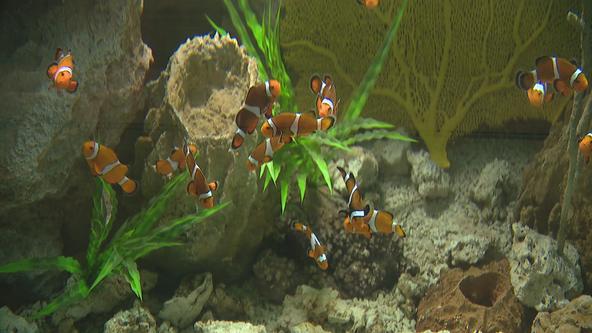 Children's Aquarium Dallas at Fair Park reopens with interactive exhibits