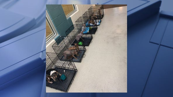 111 dogs rescued from Mesquite home