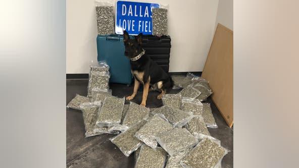 Dallas PD: 42 pounds of marijuana found at Love Field