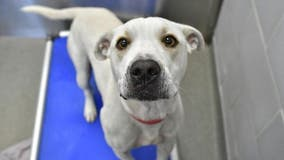 Dallas shelter urgently needs homes for larger dogs