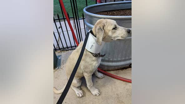 Mansfield city employees rescue puppy stuck in PVC pipe