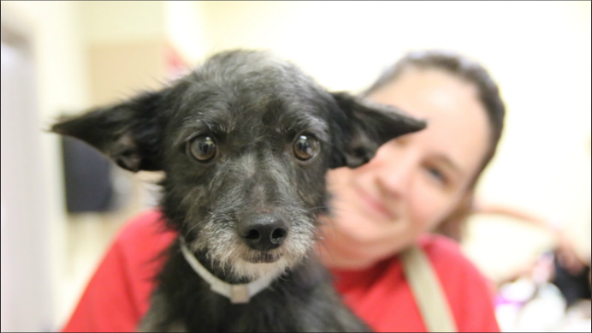 Georgians invited to Governor's Mansion for pet adoptions