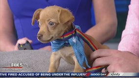 Pet of the Day: September 25, 2019