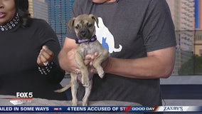 Pet of the day from PAWS Atlanta
