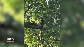Hungry hawk eyeing pets in East Atlanta, residents say