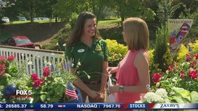 Patriotic container gardens with Pike Nurseries