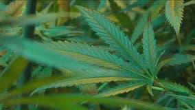 Georgia marijuana regulator gets closer to issuing licenses