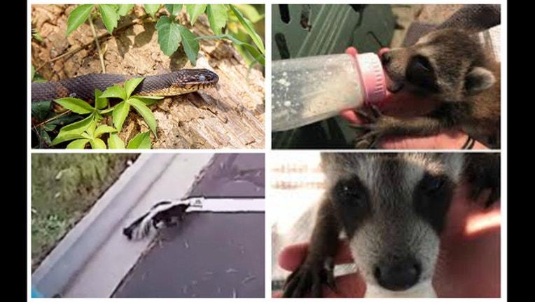 48cf54b0-Residents warned of wildlife disturbances during Harvey cleanup-408795.jpg