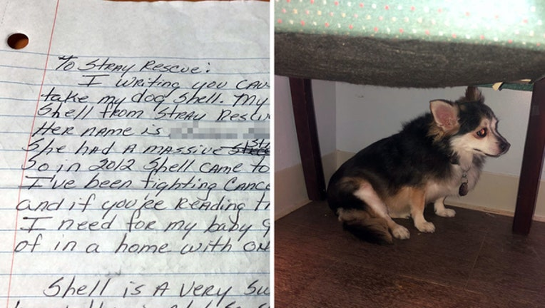 3c1728e9-plea for dogs adoption SRSL WTVT_1538675705205.jpg-401385.jpg