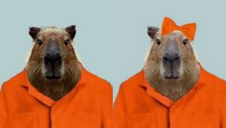 missing-capybaras_1464537829686-404023.jpg