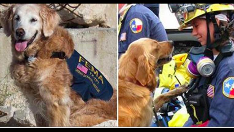 911 dog passes away_1465294755360.png