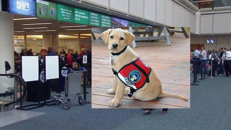 46442260-DHS-TSA-dogs_1468022829296-402429.jpg