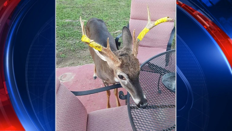 Facebook_South Carolina Pet Deer_102418_1540396925062.jpg-403440.jpg