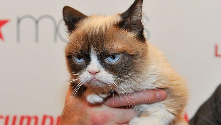 0949a2a4-GETTY grump cat_1558087256310.png-402429.jpg
