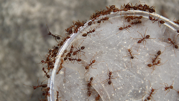GETTY_ants_092618_1537981223133-402429.png