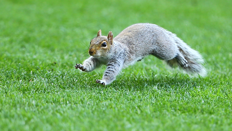 01169098-GETTY_squirrel_101718_1539776950733-402429.png