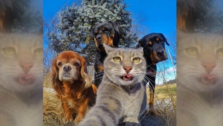 5f43e2fa-Manny The Selfie Cat_1485175506755.jpg