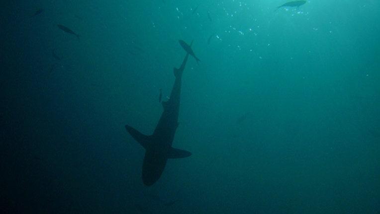 399a731e-NOAA_SharkSilhouetted_1557929171760-401720.jpg