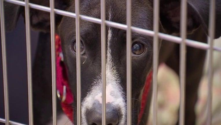 dc5e4d49-Rescue Dogs in Cage Stock (3)-401096