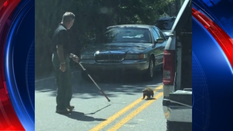 VIDEO Union County Sgt. tries to get groundhog out of the road _1498834604274.jpg
