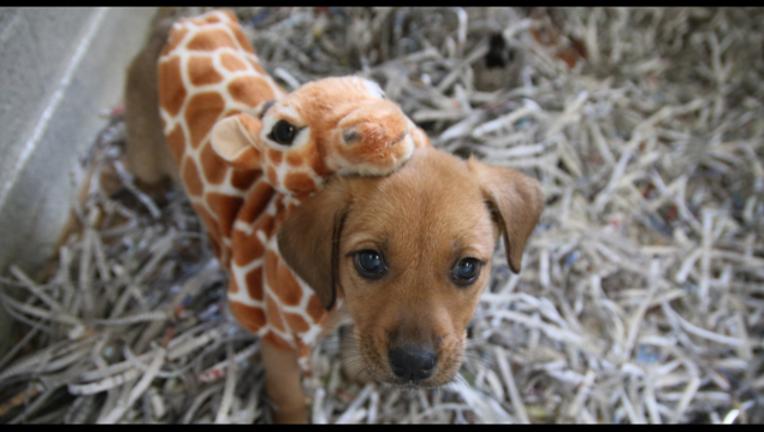 2a03df13-april the giraffe 2_1490885260880.png