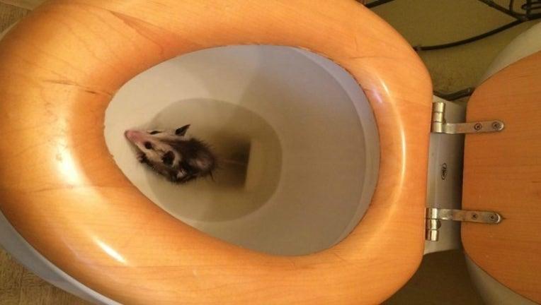 c0b8db88-toilet_1463601836849.JPG