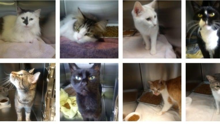 cat story_1490897809775.jpg