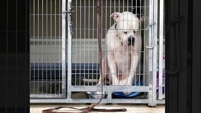dog at shelter for web_1561550524179.png-402429.jpg