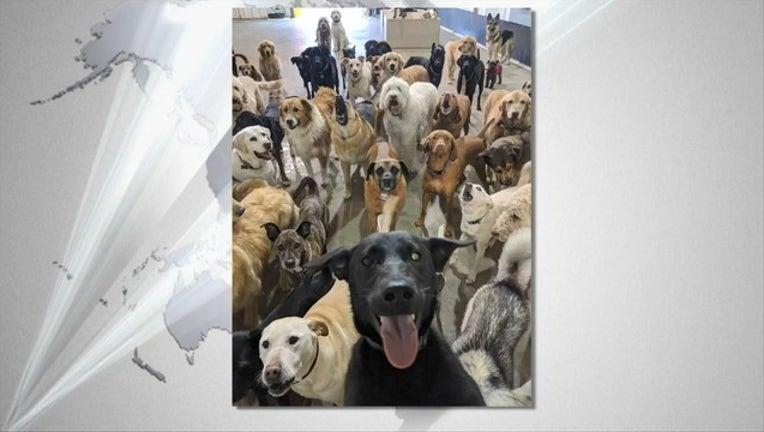 dog selfie 1_1526159777914.PNG-405538.jpg