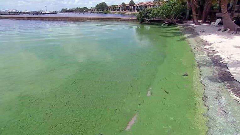 9e230e3e-florida-algae-bloom_1468431888992-402429.jpg