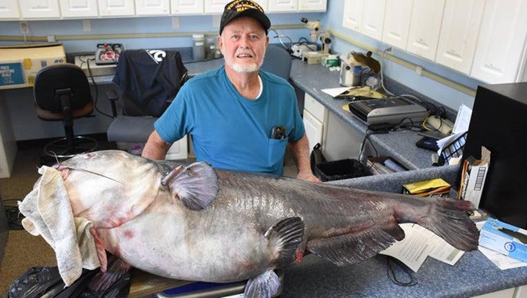2881e413-massive catfish_1524504358908.jpg-401385.jpg
