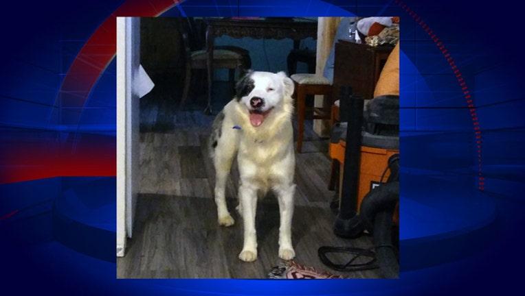 merrit-island-dog-rescue_1484797075957-402429.jpg