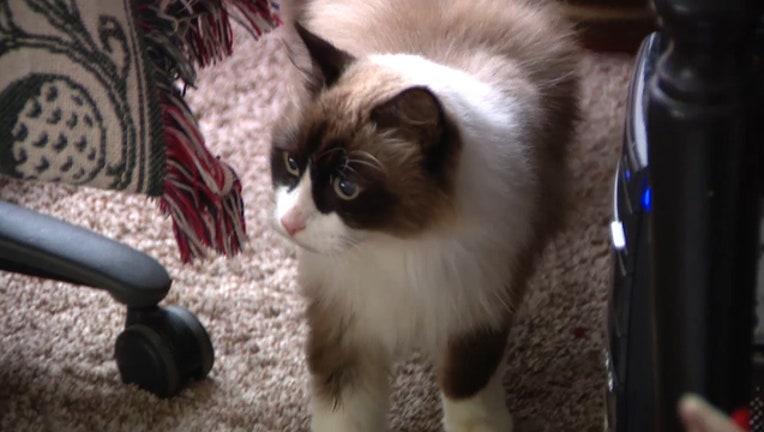 9c4f012b-missing-cat_1545953695208-402429.jpg