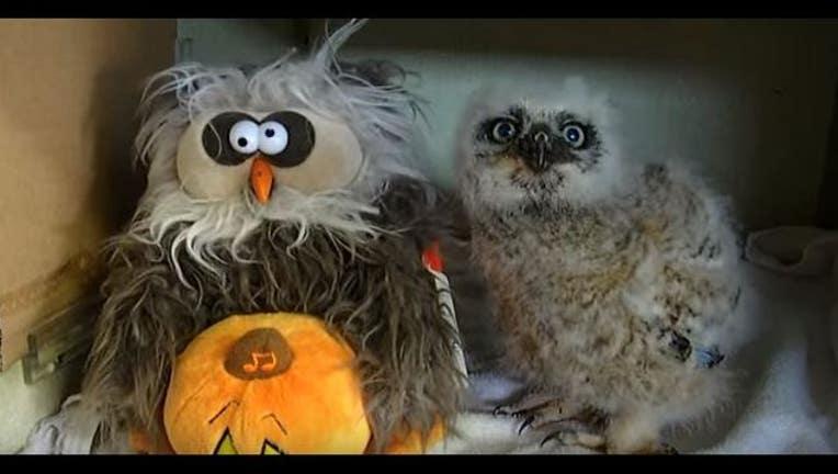 monster mash Owls