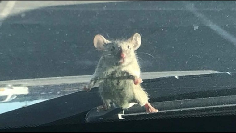 mouse on car_1518464366043.PNG-407068.jpg