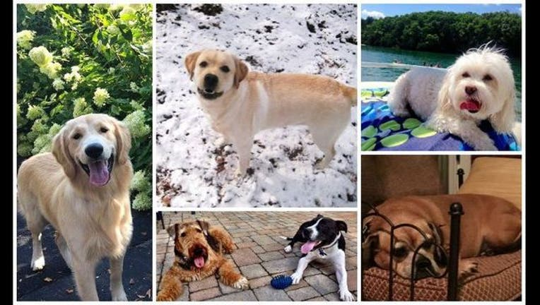 d5136f4c-National Dog Day 2015
