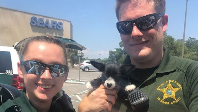 0bf68c11-puppy rescue web_1526392074153.png-402429.jpg