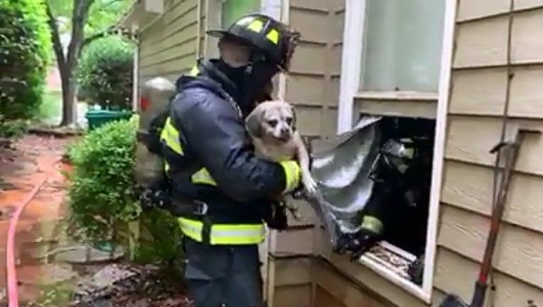 e1bd1e50-puppy rescued_1563913849599.png.jpg