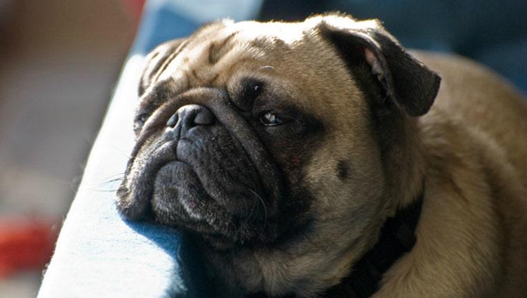 390a5dbf-sad-dog_1465389642440-404023.jpg