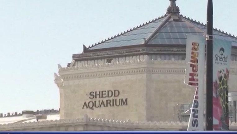 d5ea763e-shedd aquarium_1525211174663.jpg-404023.jpg