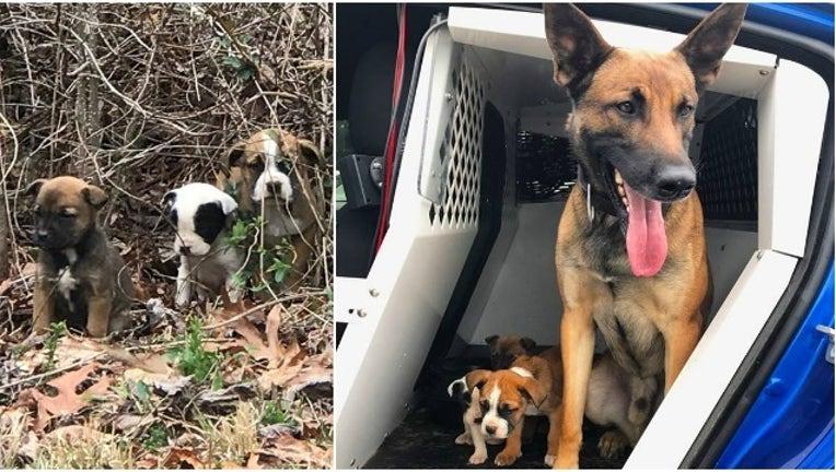 trooper rescues pups_1489496606267.jpg