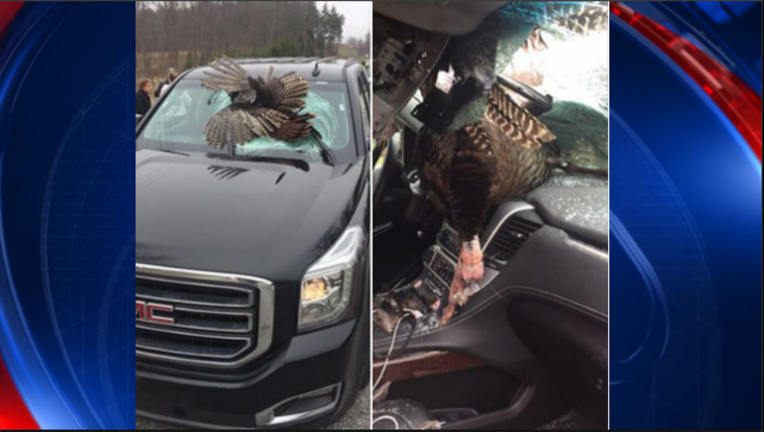 turkey into windshield final_1490796538158.PNG