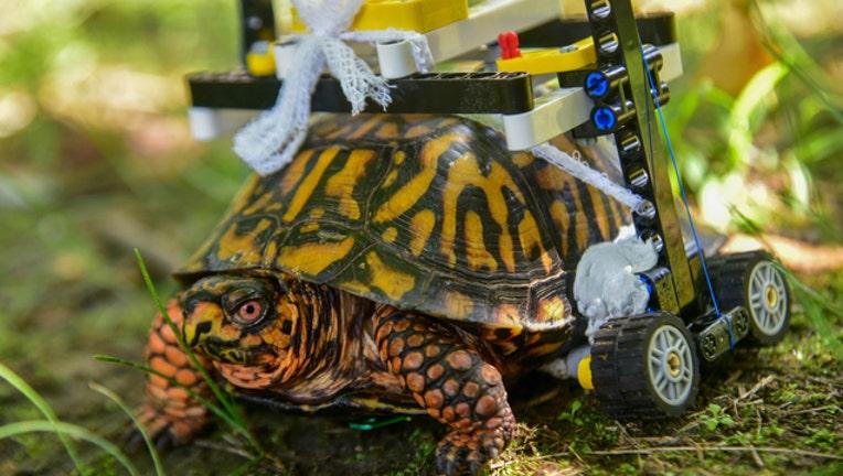 HANDOUT Maryland Zoo turtle 092618-401720