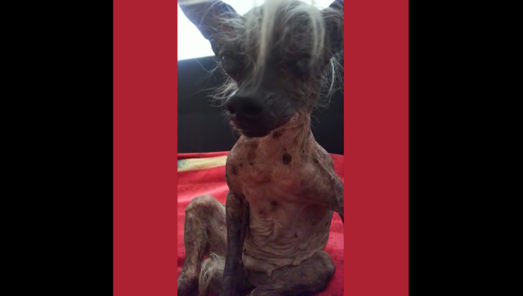 ugly dog_1466882489406-407068.png