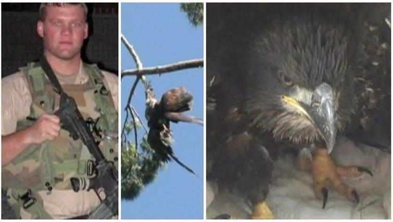 6f7de790-veteran rescues bald eagle_1467726726292.jpg